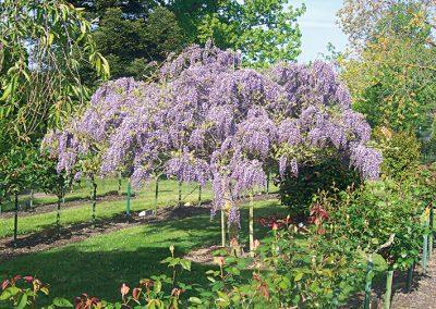 One of the gardens at Ballarat Cemetery