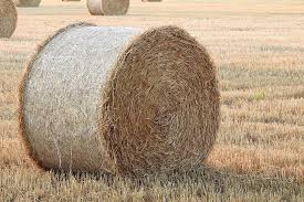 bale of staw surrounded by stubble